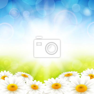 Fleurs sur le fond d'été