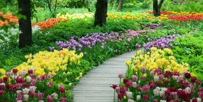 Sticker Floraison des tulipes dans le jardin