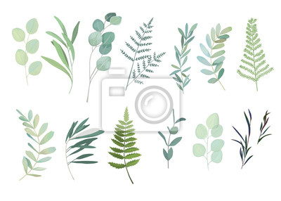 Sticker Floral greenery set with eucalyptus, fern and olive branch. Vector illustration