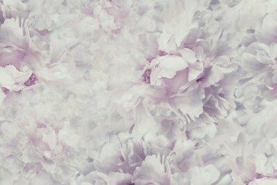 Sticker Floral vintage beau fond. Fonds d'écran de fleurs pivoine rose-blanche. Composition des fleurs. Fermer. La nature.