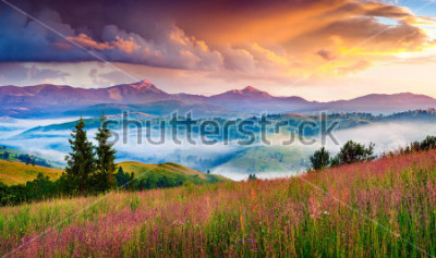 Sticker Foggy summer sunrise in the Carpathian mountains. Colorful morning scene in the mountain valley. Beauty of nature concept background. Artistic style post processed photo.