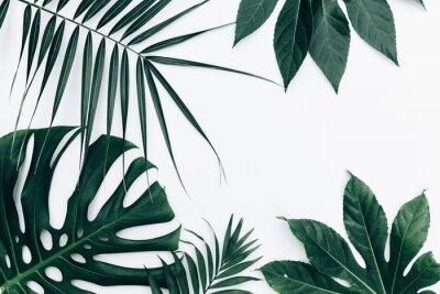 Sticker Fond branché tropical. Feuilles sur fond blanc