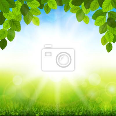 Fond d'été avec des feuilles vertes