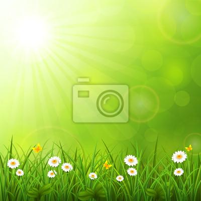 Fond d'été avec l'herbe