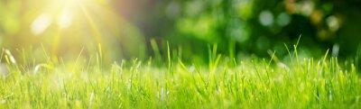 Sticker Fond d'herbe verte fraîche en journée d'été ensoleillée dans le parc