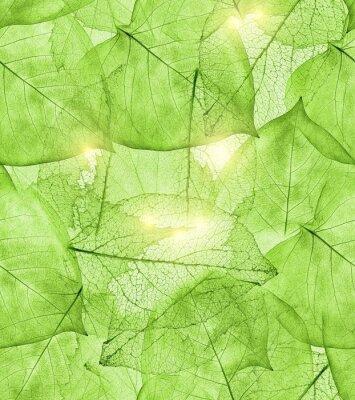 Sticker fond de feuilles vert foncé
