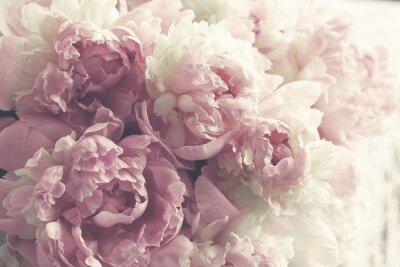 Sticker Fond de fleurs de pivoines roses moelleuses