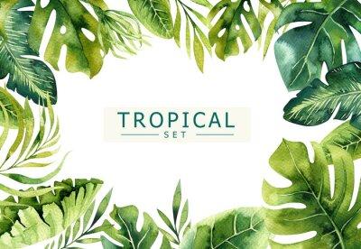 Sticker Fond de plantes tropicales aquarelles dessinées à la main. Feuilles de palmier exotiques, arbre de la jungle, éléments de borany tropiques du Brésil. Parfait pour la conception de tissu. Aloha art.