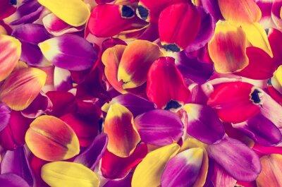 Sticker Fond de tulipes de pétales