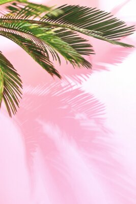 Sticker Fond pastel tropical d'été avec palmier