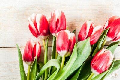 Sticker Fond pour félicitations, cartes de voeux. Fleurs de tulipes printanières fraîches, sur fond de bois blanc vue de dessus copie espace
