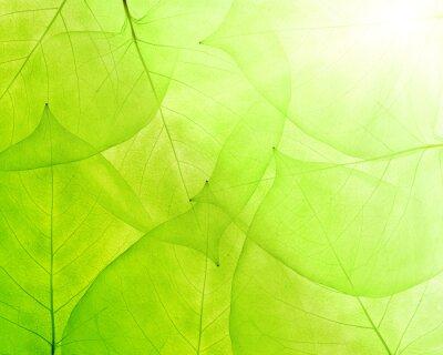 Sticker fond vert des feuilles minces