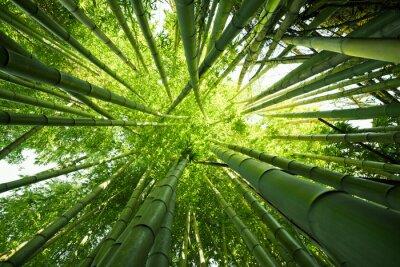 Sticker Fonds Nature Vert en bambou