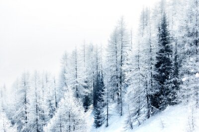 Sticker Forêt couverte de neige