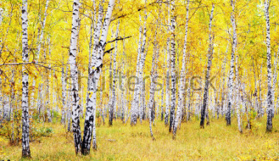 Sticker forêt d'automne de bouleau