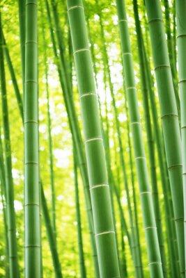 Sticker Foret de bambou