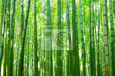 Sticker Forêt De Bambou Du0027Arashiyama Près De Kyoto, Japon
