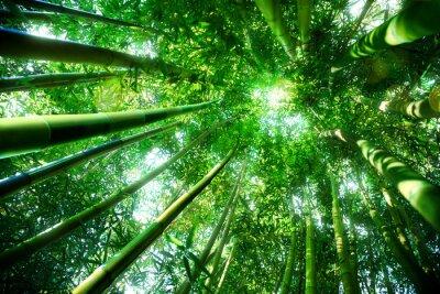 Sticker forêt de bambous - notion zen