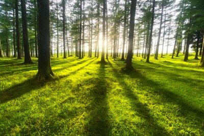 Sticker forêt ensoleillée