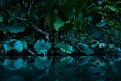 Sticker Forêt tropicale humide avec miroir d'eau