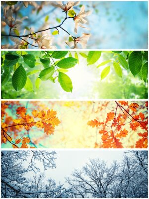 Sticker Four seasons. A pictures that shows four different pictures representing the four seasons: winter, spring, summer and autumn.