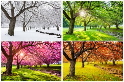Sticker Four seasons with japanese cherry trees in Hurd Park, Dover, New Jersey