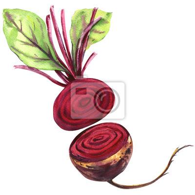 Fraîches, betterave, feuilles, isolé, aquarelle, Illustration