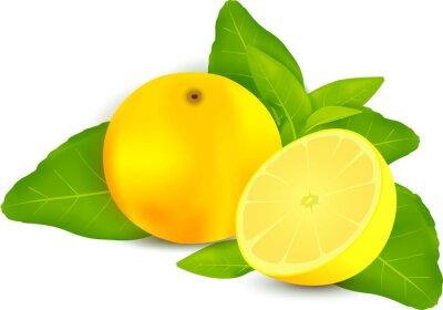 Sticker Frais, citrons, feuilles, blanc, fond