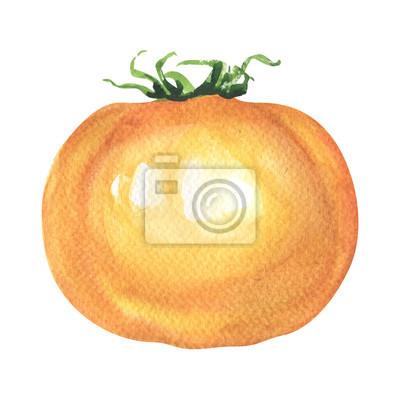 Frais, jaune, tomate, isolé, aquarelle, Illustration, blanc