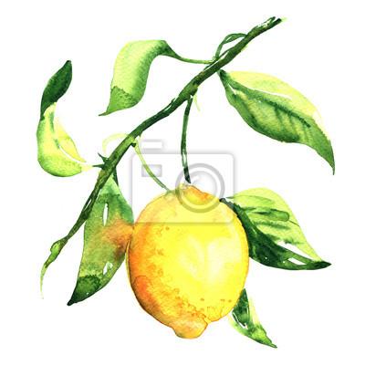 Frais, mûre, citron, feuille, branche, isolé, aquarelle, Illustration