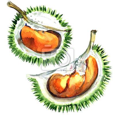 Frais, mûres, Durian, roi, fruits, isolé, aquarelle, Illustration