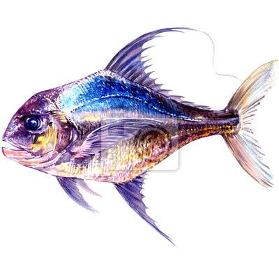 Frais, océan, bleu, jaune, fish, isolé, aquarelle, Illustration, blanc, fond