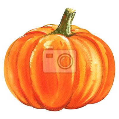 Frais, orange, Citrouille, isolé, aquarelle, Illustration, blanc