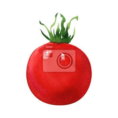 Frais, rouges, tomate, isolé, aquarelle, Illustration, blanc