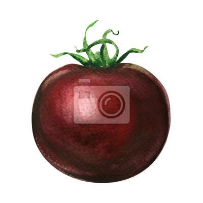 Frais, sombre, rouges, tomate, isolé, aquarelle, Illustration, blanc
