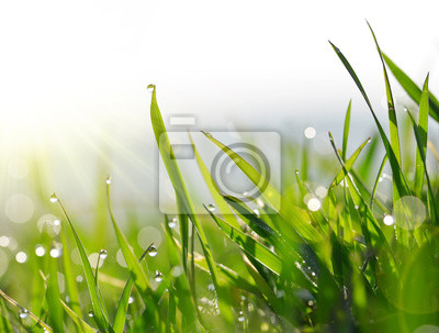 Frais, vert, lames, herbe, rosée, gouttes, closeup.