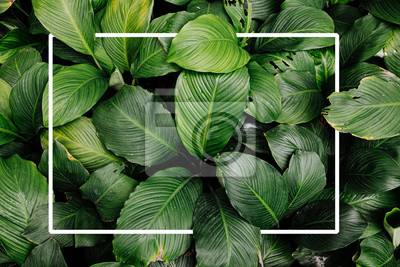 Sticker Frame tropical leaf texture green leaves Background, foliage nature
