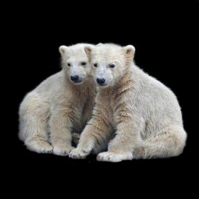 Sticker Fraternité des oursons polaires