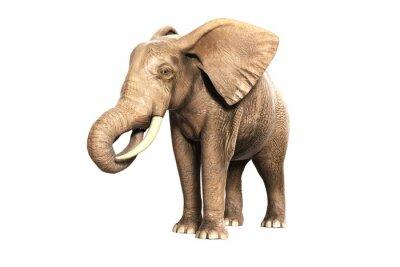 Sticker Freigestellter Elefant am Fressen (gerandertes Bild)