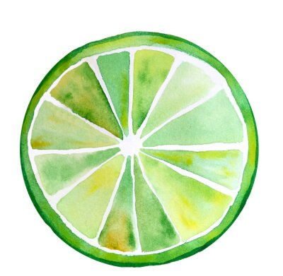 Fresh green and yellow lime slice isolated. Watercolor stylized illustration. Segment closeup, one slice, macro, round icon of tropical citric fruit drawn by hand.Ripe organic sour fetus. Citrus