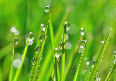 Sticker Fresh green grass with dew drops closeup. Nature Background