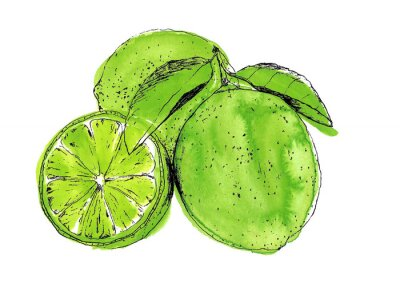 Fresh lime - hand-painted watercolor illustration