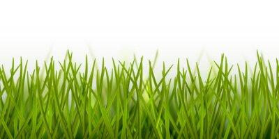 Sticker Frontière d'herbe verte transparente réaliste de vecteur ou cadre isolé sur fond blanc - nature, écologie, environnement, modèle de jardinage
