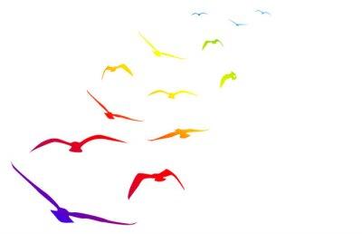 Sticker Gabbiani, volare, volo, arcobaleno, rythme