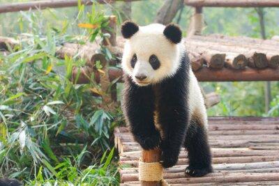 Sticker Géant, panda, curieusement, debout, Chengdu, Szechuan, porcelaine