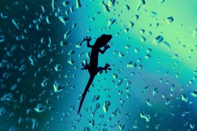 Sticker Gecko On Glass Window humide avec la pluie Drops