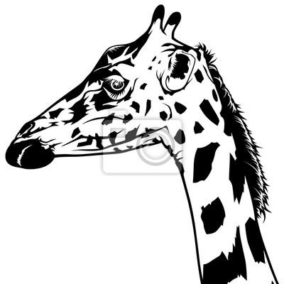 Sticker Girafe Tête Dessin Noir Blanc Illustration Vecteur