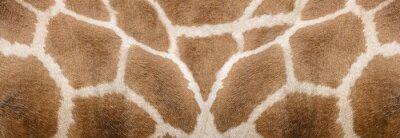 Sticker Giraffe skin Texture - Image 1