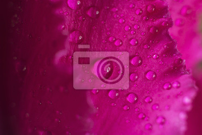 goutte de rosée sur une fleur