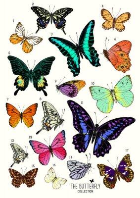 Sticker Grande collection de papillons, tiré par la main ensemble isolated.Vector illustration
